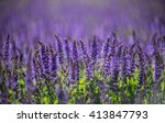 lavender field | Shutterstock . vector #413847793