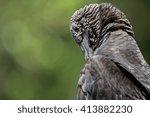 a black vulture portrait. | Shutterstock . vector #413882230