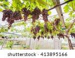 red grape fruits in vineyards  | Shutterstock . vector #413895166