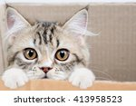 Stock photo lovely tabby persian cat playing in the paper box 413958523