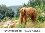 eurasian brown bear  ursus... | Shutterstock . vector #413972668