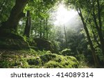 sun rays in natural green forest   Shutterstock . vector #414089314