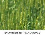 wheat   Shutterstock . vector #414090919