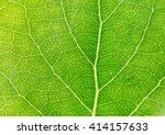 green leaves background. green... | Shutterstock . vector #414157633
