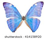 Stock photo morpho adonis ice blue butterfly isolated on white background 414158920