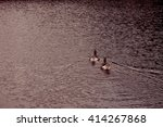Two Ducks Are Swimming In A Lake