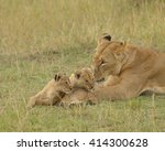 Lioness and two cubs  panthera...