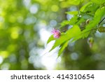 soft nature scene | Shutterstock . vector #414310654