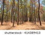 fir tree park in thailand... | Shutterstock . vector #414389413