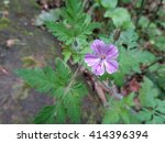 Pink wild flower in spring forest - stock photo