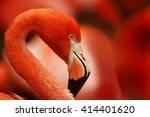 Flamingo With Red Background