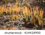 signs of new life after a... | Shutterstock . vector #414418900