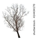 isolated tree with no leaves on ... | Shutterstock . vector #414434170