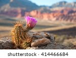 an englemann hedgehog cactus in ...