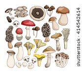 hand drawn mushrooms isolated... | Shutterstock .eps vector #414542614
