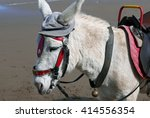 Closeup Of Donkey Wearing Hat...