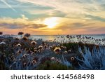 Thistles On Dunes   Sunset At...