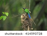 Colorful Of Long Tail Bird ...