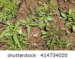 weeds. new plants emerging in... | Shutterstock . vector #414734020