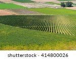 vineyard in autumn  la rioja ... | Shutterstock . vector #414800026