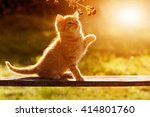 Stock photo young cat playing in the garden with a flower on a wooden board sitting atmospheric back light 414801760