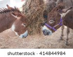 Horse Dwarf Young Eat Grass