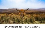 highland cow in field with the... | Shutterstock . vector #414862543
