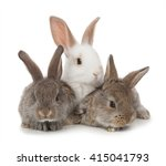 Stock photo three small rabbit on a white background 415041793