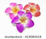 colorful frangipani flower... | Shutterstock . vector #415083418
