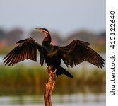Small photo of African darter sunning its wings over a river
