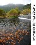 Small photo of Fish in pellucid river, water fail, Forest
