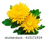 Two Yellow Chrysanthemum Flowe...