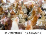 chickens in the farm | Shutterstock . vector #415362346