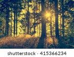 vintage landscape in forest   Shutterstock . vector #415366234