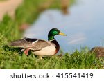 birds and animals in wildlife.... | Shutterstock . vector #415541419