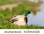 birds and animals in wildlife.... | Shutterstock . vector #415541428