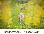 golden dogs in the flowers and... | Shutterstock . vector #415590634