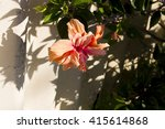 showy pink suffused with orange ... | Shutterstock . vector #415614868