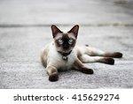 thai cat relax on cement floor  ... | Shutterstock . vector #415629274