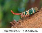 Cicada Turkey