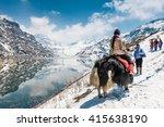 Sikkim India April 13   Yak At...