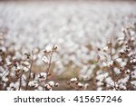 cotton fields ready for... | Shutterstock . vector #415657246