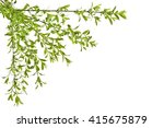 young spring privet twigs with... | Shutterstock . vector #415675879