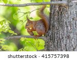 Brown Squirrel Eating A Fir...