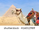 Giza Pyramids And Camel In...