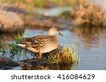 birds   animals in wildlife.... | Shutterstock . vector #416084629