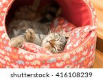 Stock photo sleeping cat in cat bed 416108239