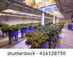 commercial cannabis grow | Shutterstock . vector #416128750