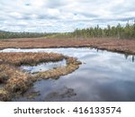 Algonquin Provincial Park Spruce Bog Boardwalk Hiking Trail