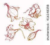 hippeastrum. amaryllis. flowers ... | Shutterstock .eps vector #416148358